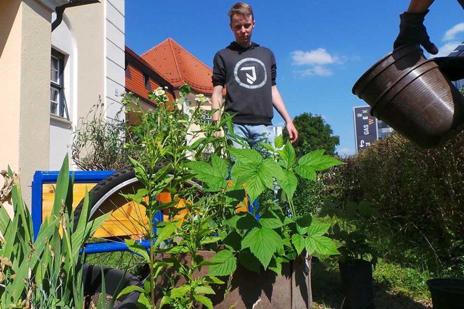 Kräuterpflanzen wie Zitronenmelisse und Salbei. Ein junger Mann im Hintergrund. Jemand gießt die Pflanzen.